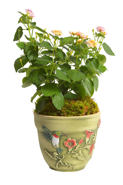 Hummingbird-8'-Planter