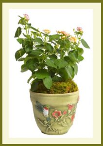 Hummingbird 8 inch Planter  Hand Painted Aged Moss  $39.99