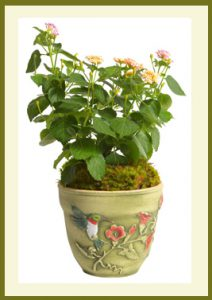 Hummingbird 8_ Planter - Potted