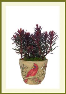 Cardinal Planter Potted $29.99