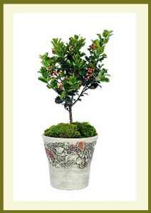 Holiday Planter $39.99